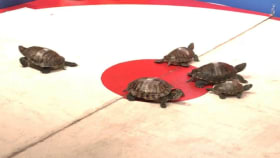 You Have To See This Bar That Races Turtles