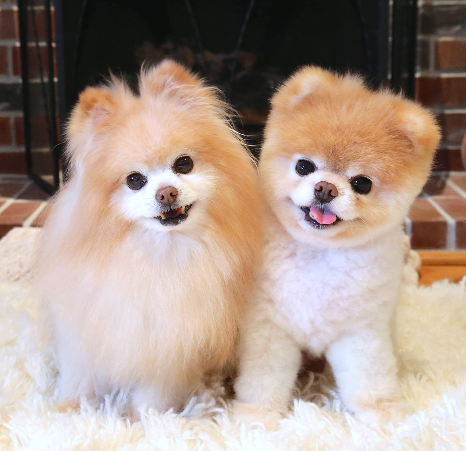 Inside The Weird And Wonderful World Of Instagram Pet Influencers