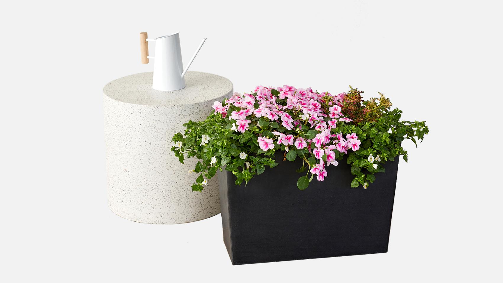 Bloomscape Patio Plant Set