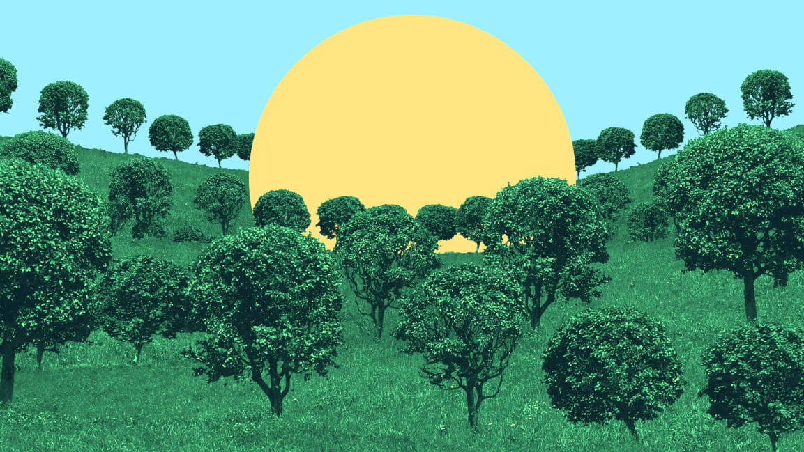 1 trillion trees: What would it take, how would it work, and is it even worth it?