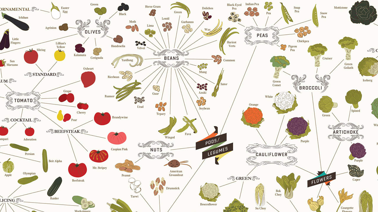 infographic over 400 vegetables on one incredibly healthy poster