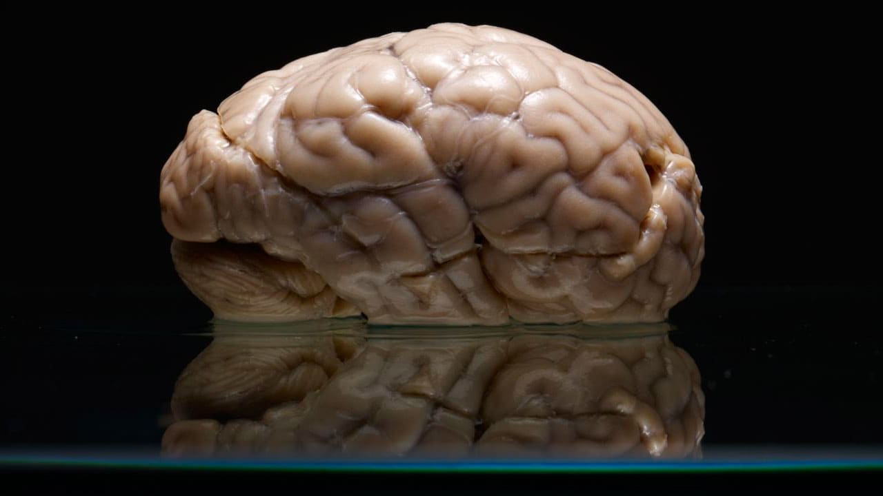 Amazing Photographs Of A Giant, Forgotten Collection Of Human Brains