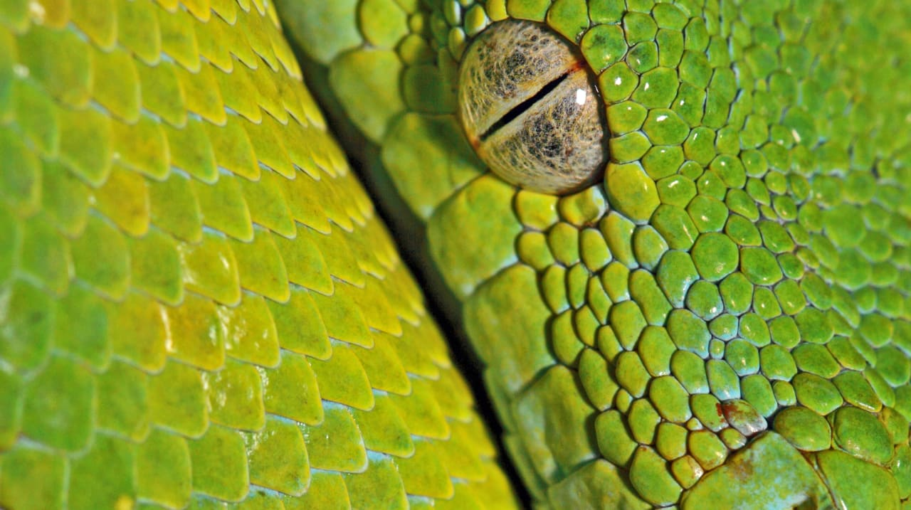How To Know If You're Working With Mammals Or Reptiles (And Why It Matters To Your Creativity)