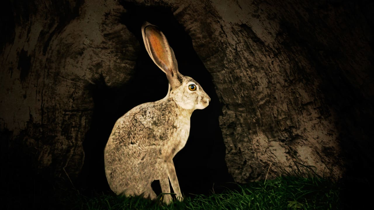 The Hare Finally Beats the Tortoise: How Brands Can Get Up To Speed For A Real-Time World