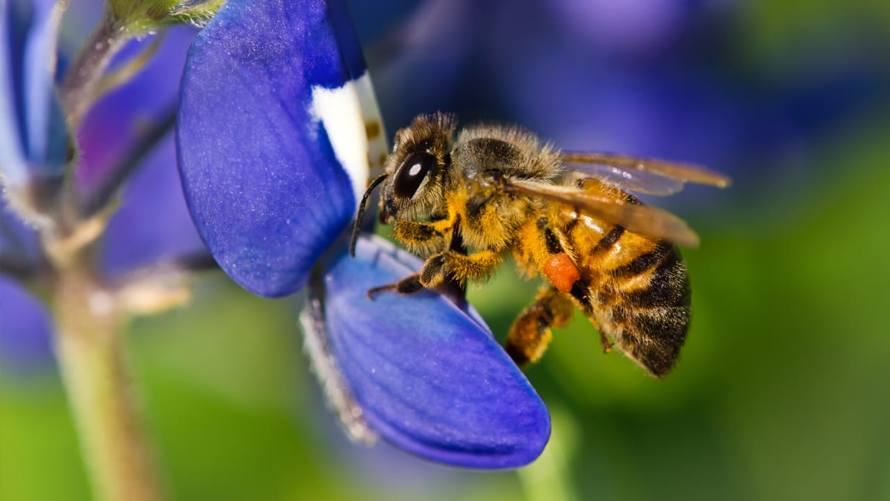 What Really Happened At Monsanto's Bee Conference