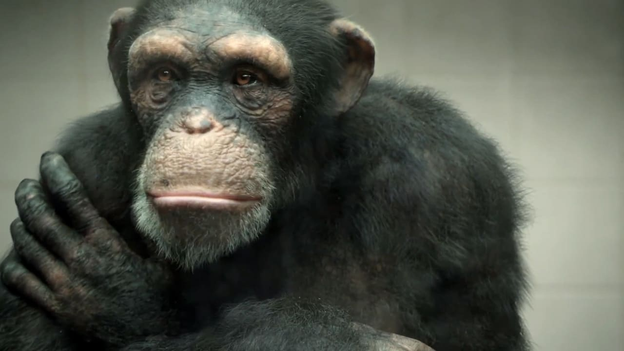 PETA Puts A (CG) Ape In A Tragic Spot To Make A Point About Apes In Spots