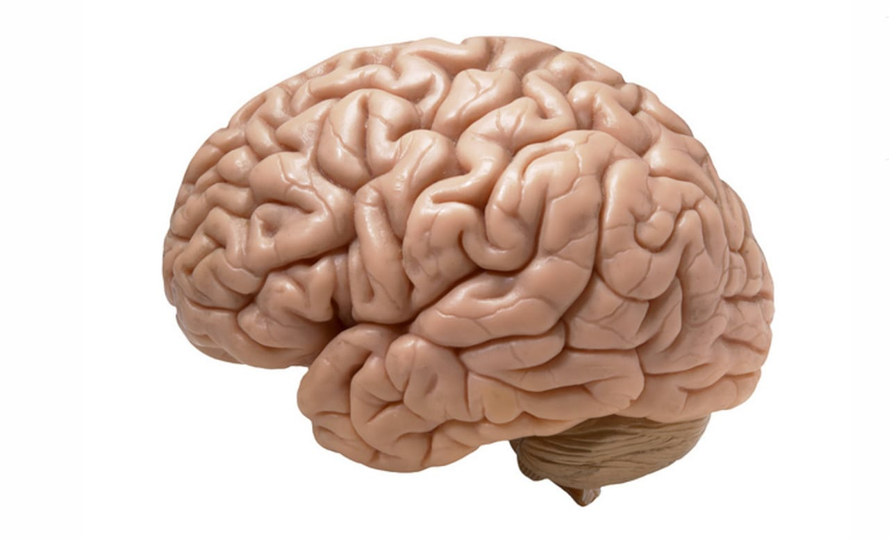 an analysis and a comparison of the human brains and the computer By some comparisons, human brains can process far more information than the fastest computers in fact, in the 2000s, the complexity of the entire internet was compared to a single human brain.