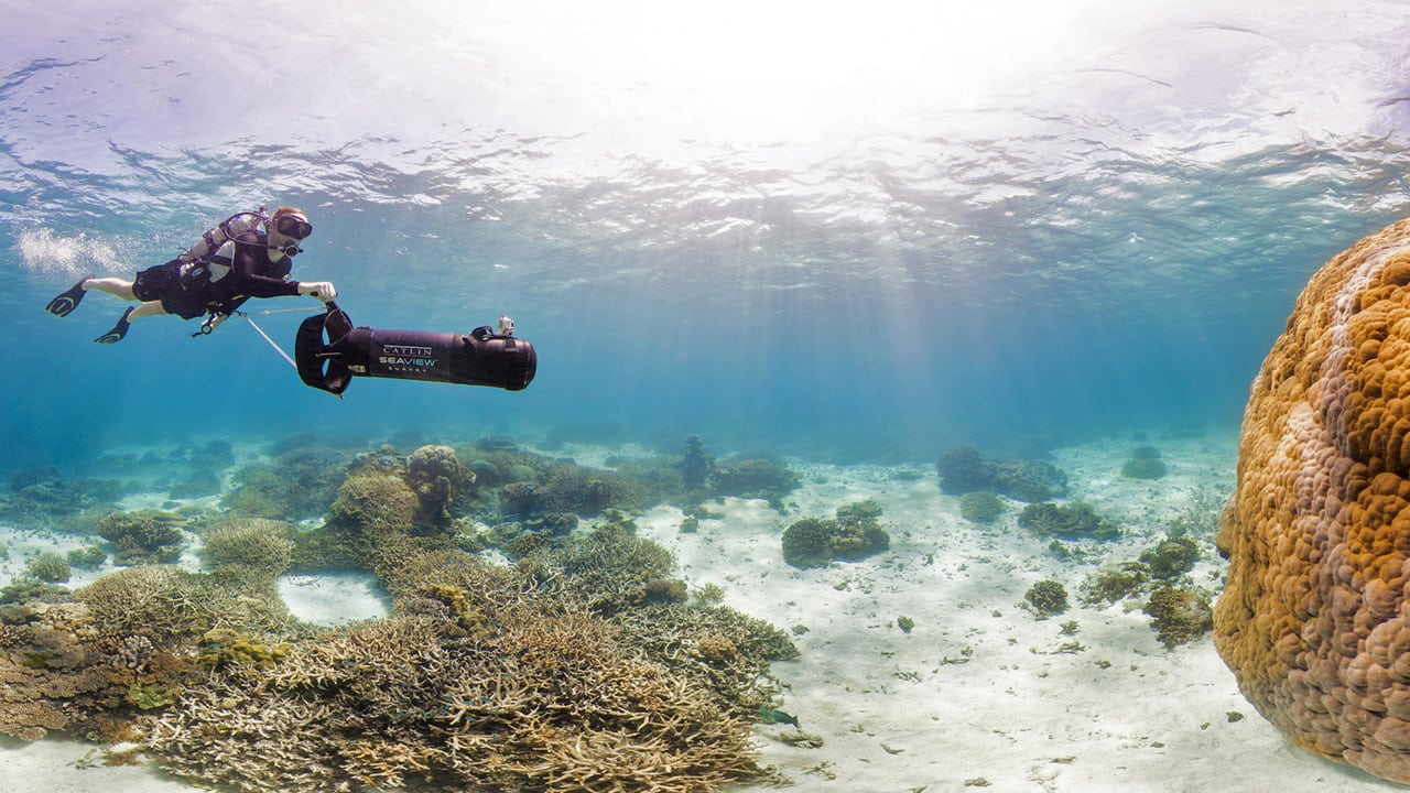 the advantages of coral reefs for