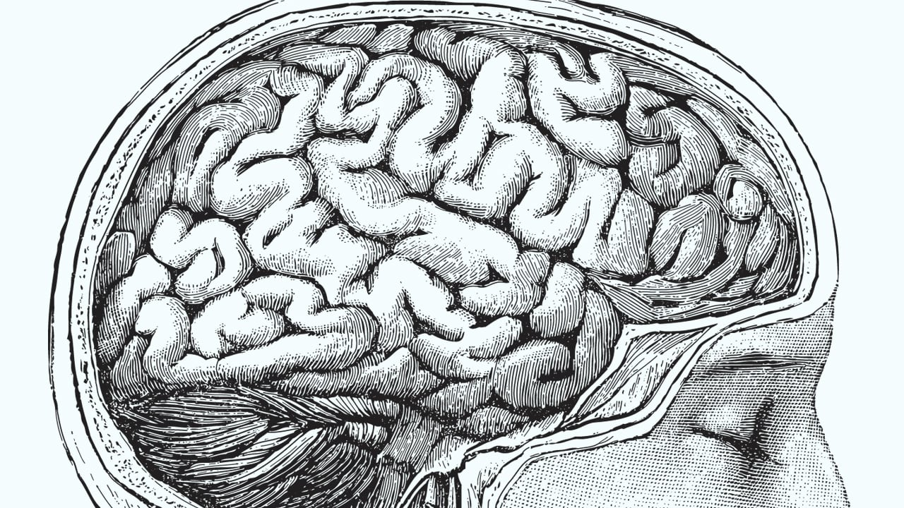The Computer Of The Future Will Be An Electronic Human Brain