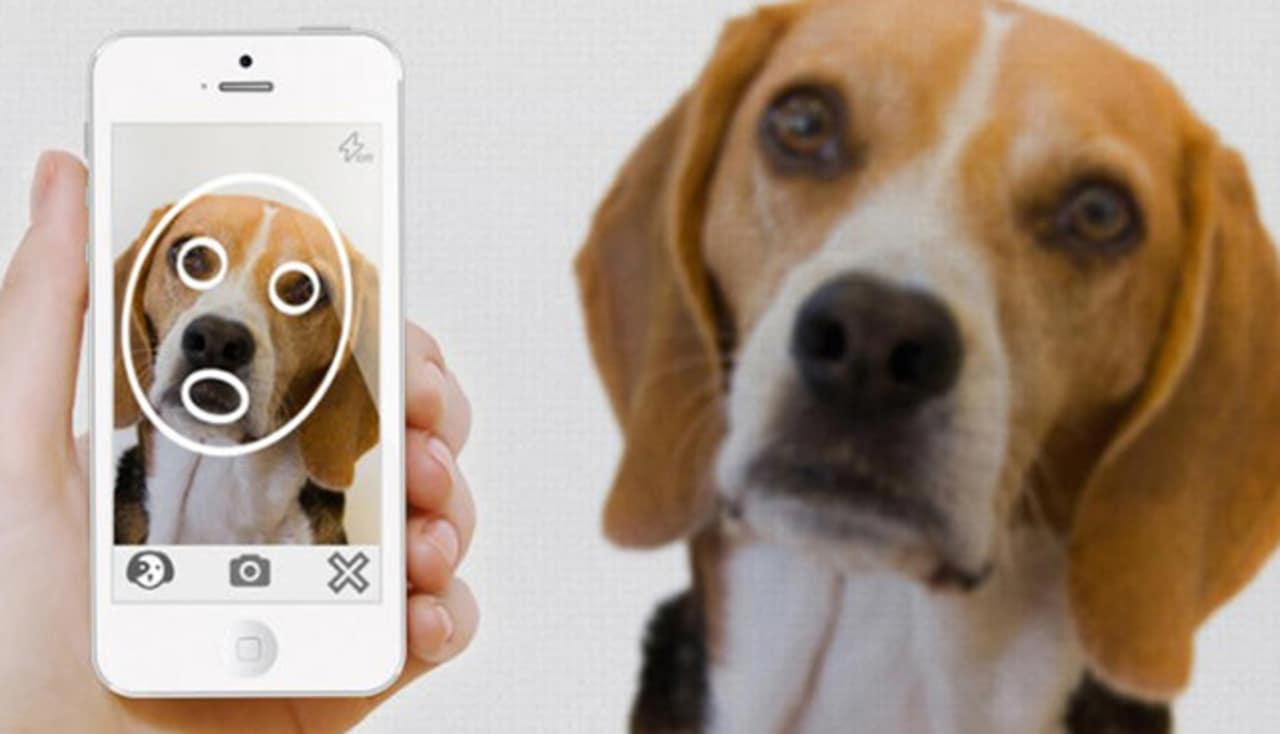 This App Recognizes Your Pet's Facial Features To Find Them