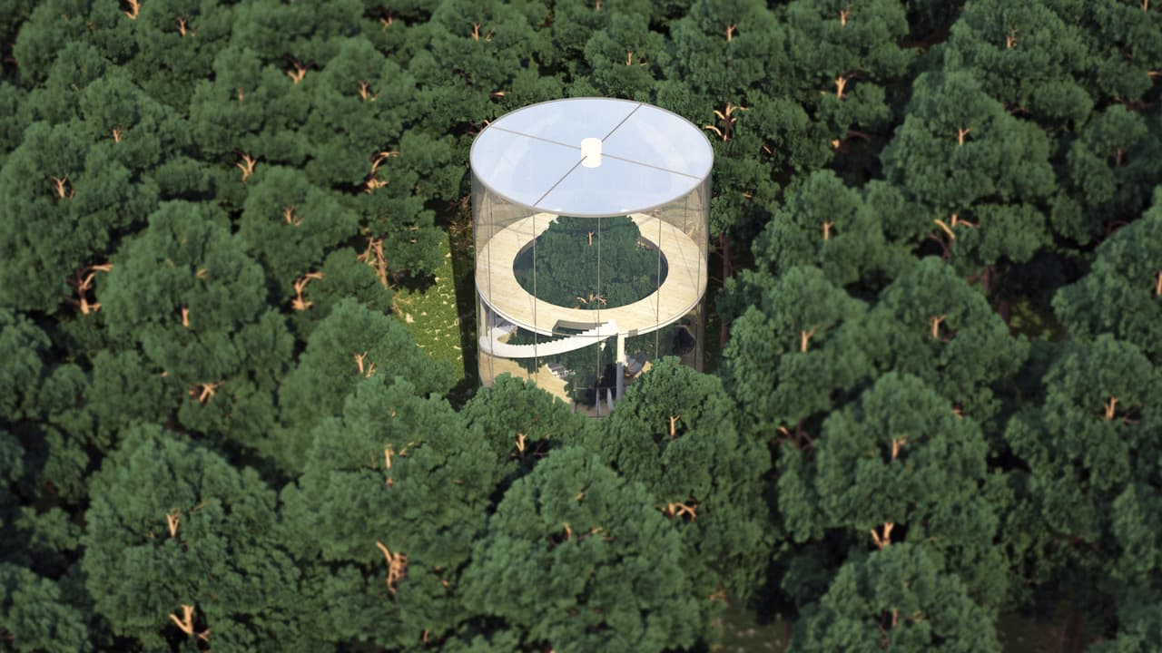 this literal treehouse is a glass house built around an entire tree