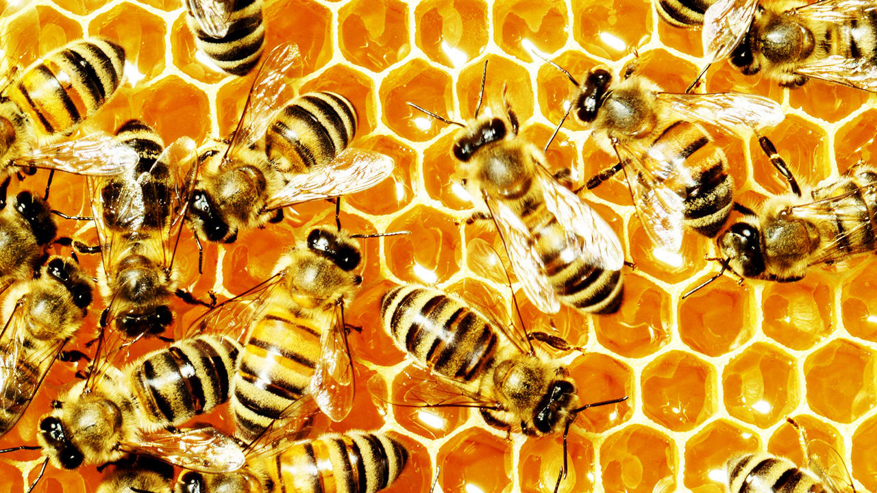 the queen will see you now how bees sense of smell might soon diagno