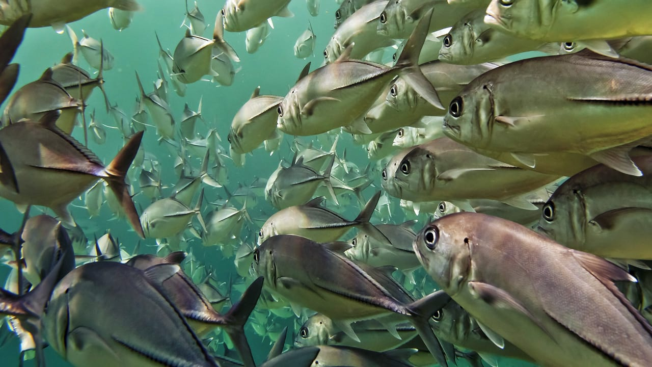 3 Ideas To Save The Seafood Industry Of The Future