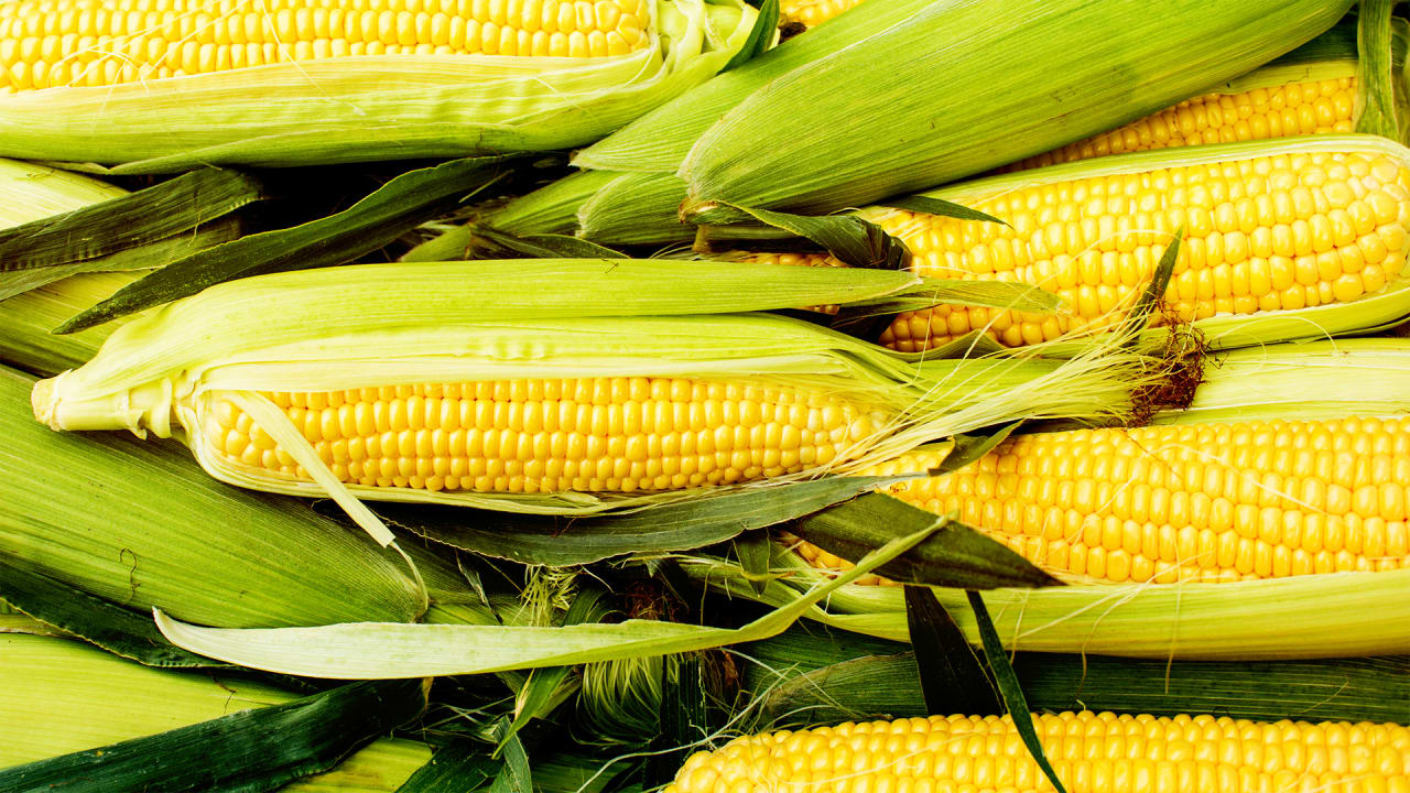 If Genetically Modified Crops Can Feed The World, We Should Loosen Regulations