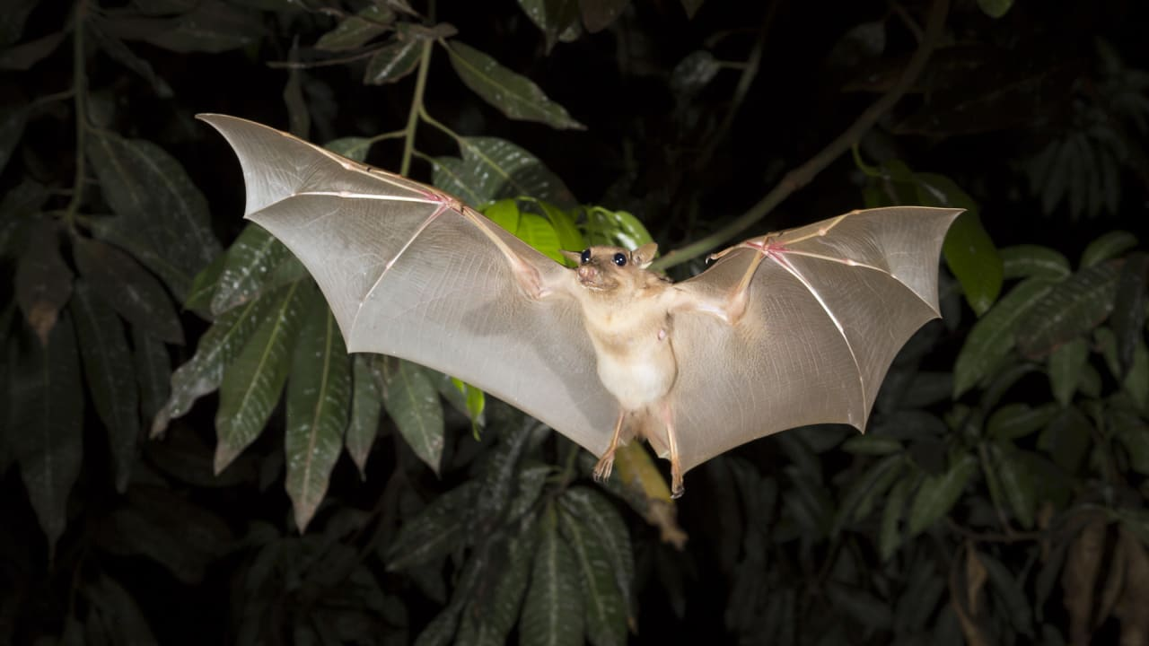 Solar-Powered Fruit Bat Trackers Could Turn Bikeshare Programs Into Data Fleets