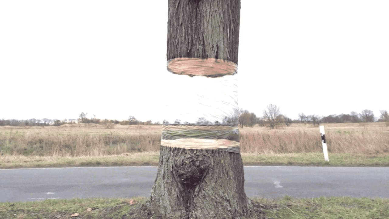 This Levitating Tree Illusion Is Very Convincing