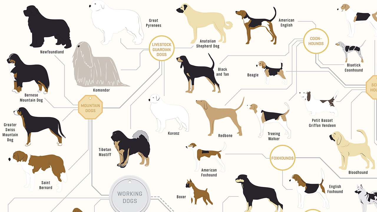 Dog Breed Recommender