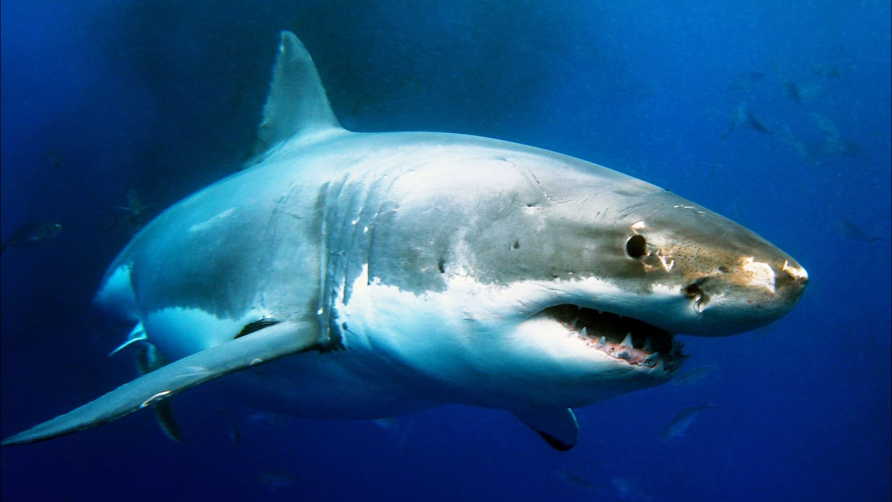Did You Know We Kill Sharks So We Can Put Their Livers In Moisturizer?