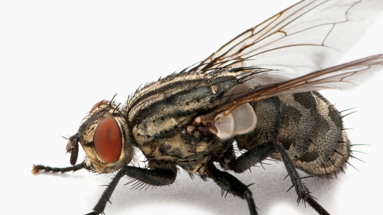 Watch This Video Of How Flies Fly That's Going To Inspire Better Drone Flight