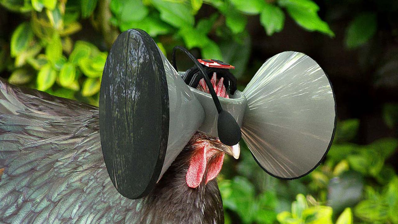 """Could """"Second Livestock"""" Give Chickens A Virtual Free Range?"""