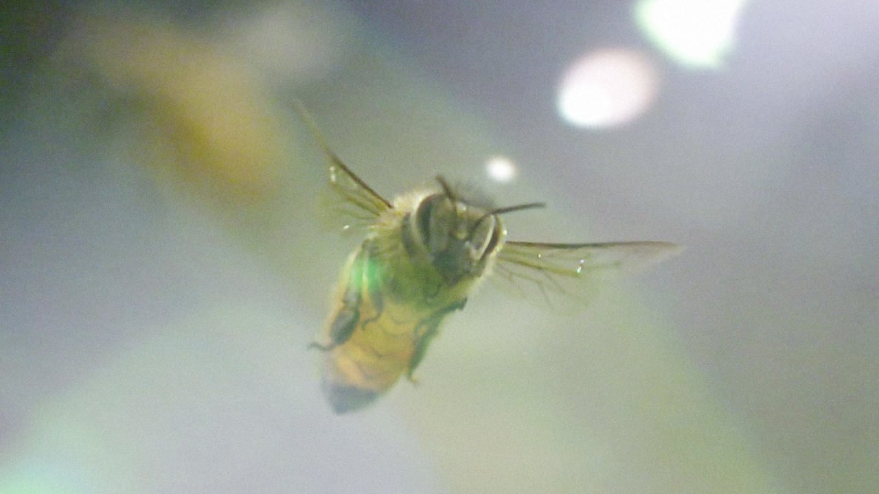 Get An Up-Close, Super Slow-Motion Look At Honey Bees In Flight And At Work