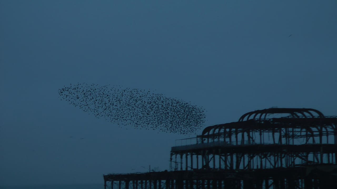 The Beautiful Phenomena Of Starling Flocks, Explained By Computers