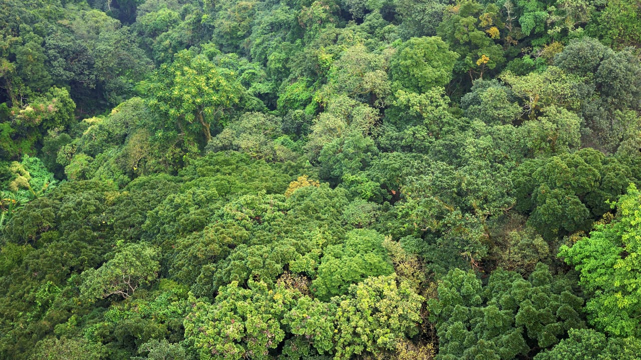 Trees Are Heroes: They Save Hundreds Of Lives A Year