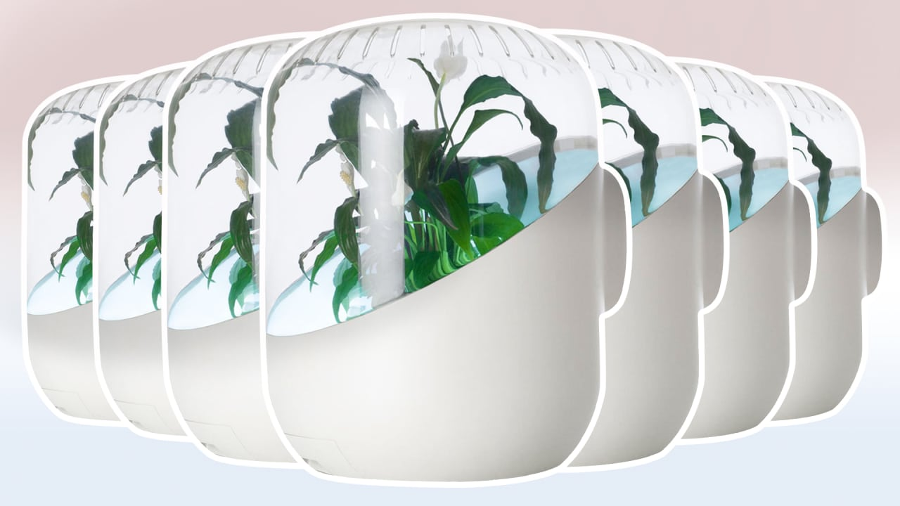 This Air Purifier Has A Plant Growing Inside It