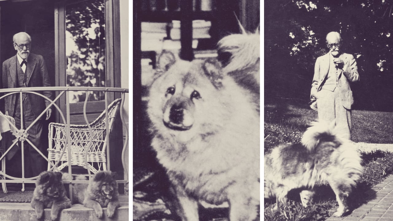 Dog Complex: Analyzing Freud's Relationship With His Pets
