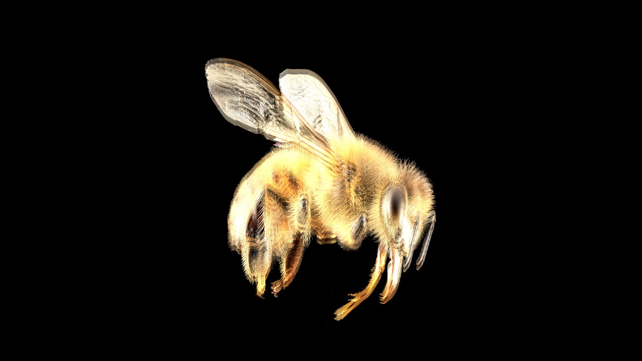 Why The Federal Government Is Bailing Out Honeybees