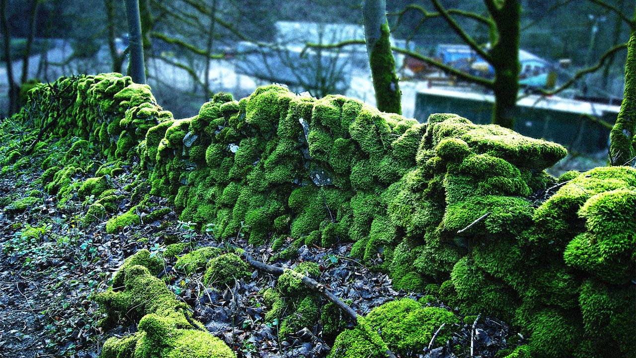 This Re-Engineered Moss Can Grow Perfume–And Even Medicine