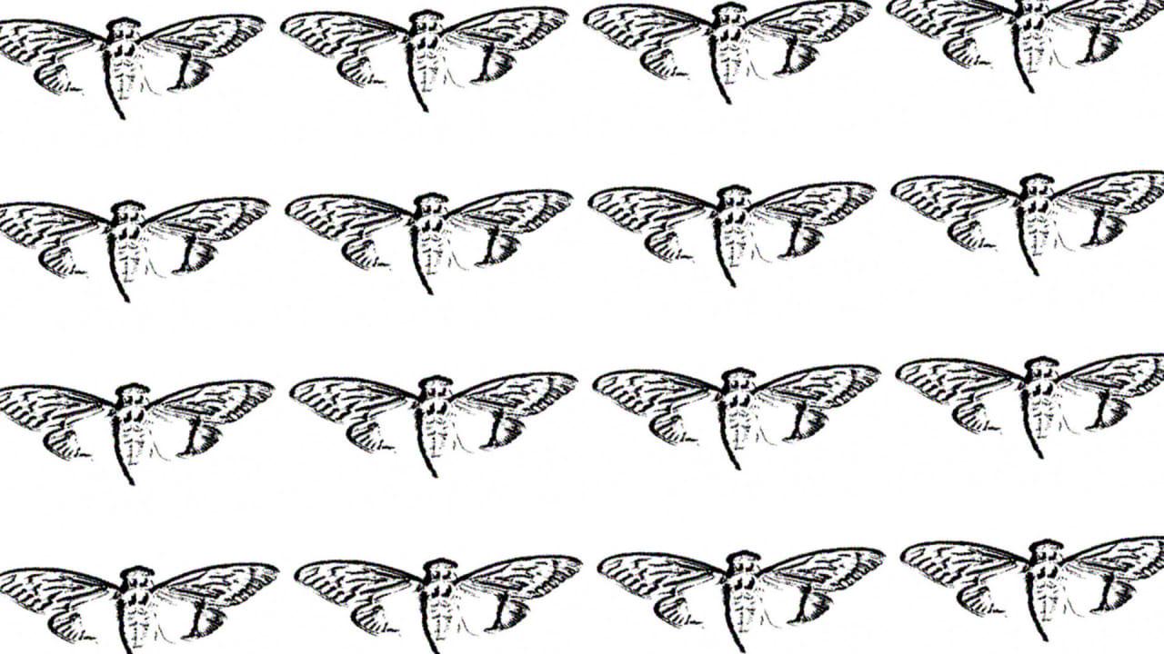 Inside The Cicada 3301 Cabal