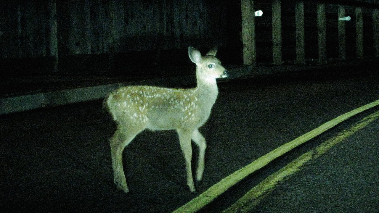 Ending Roadkill By Giving Animals Right Of Way