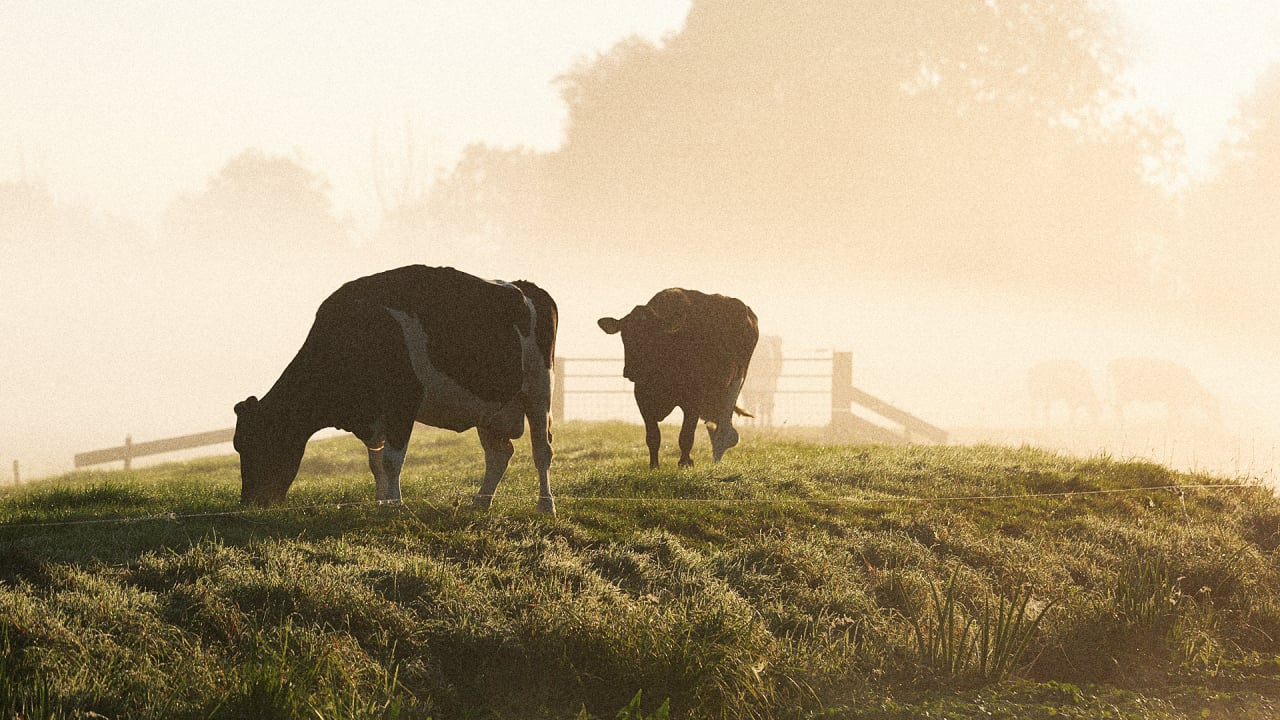 A Google Analytics For Livestock Helps Farmers Prove Their Meat Isn't Destroying The Amazon