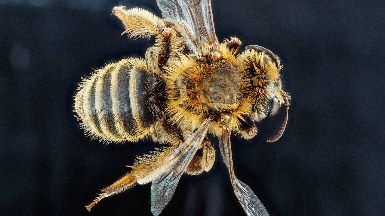 Take The Sting Out Of Bee Stings, With The Magic Of Sugar