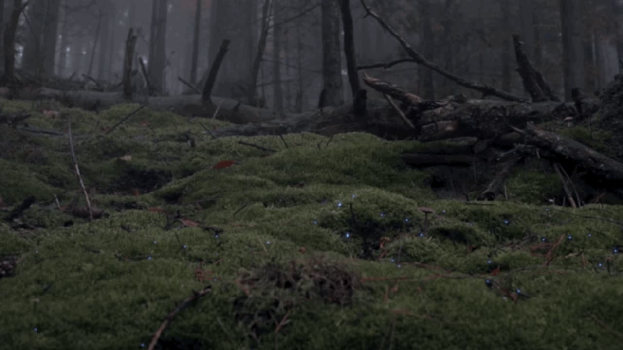 Watch Two Artists Make A Forest Magically Glow