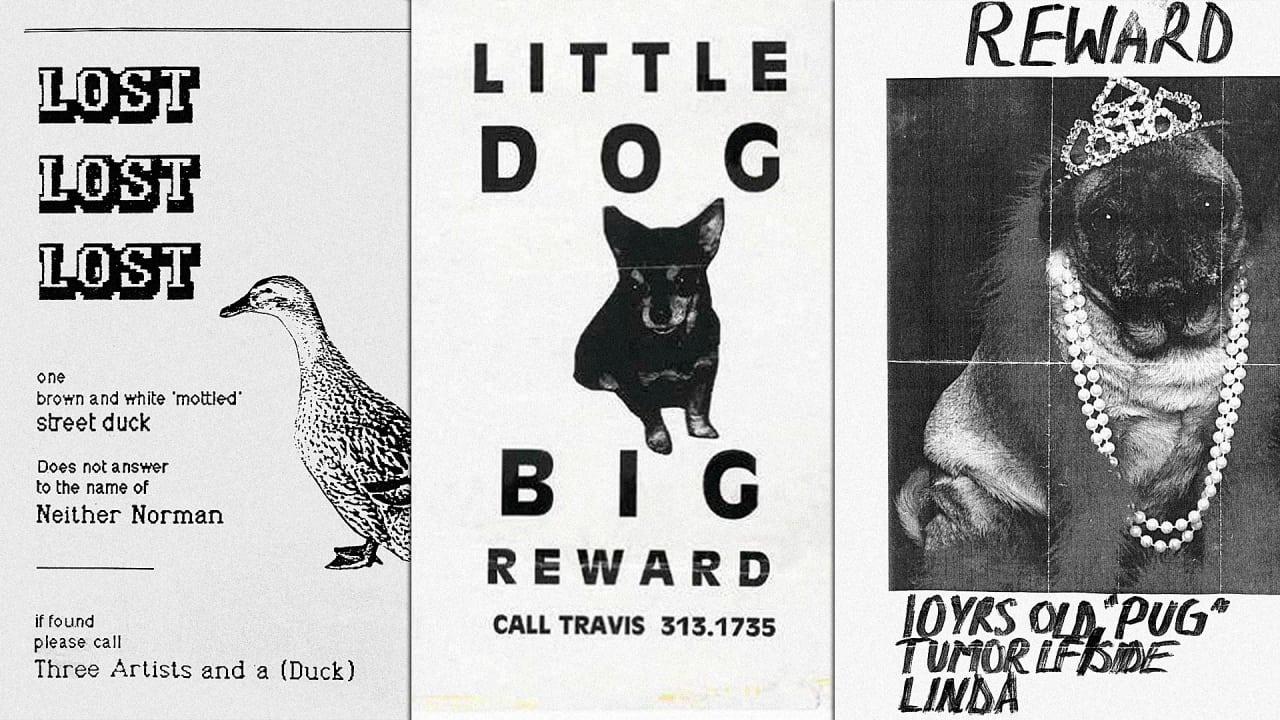 missing pet poster