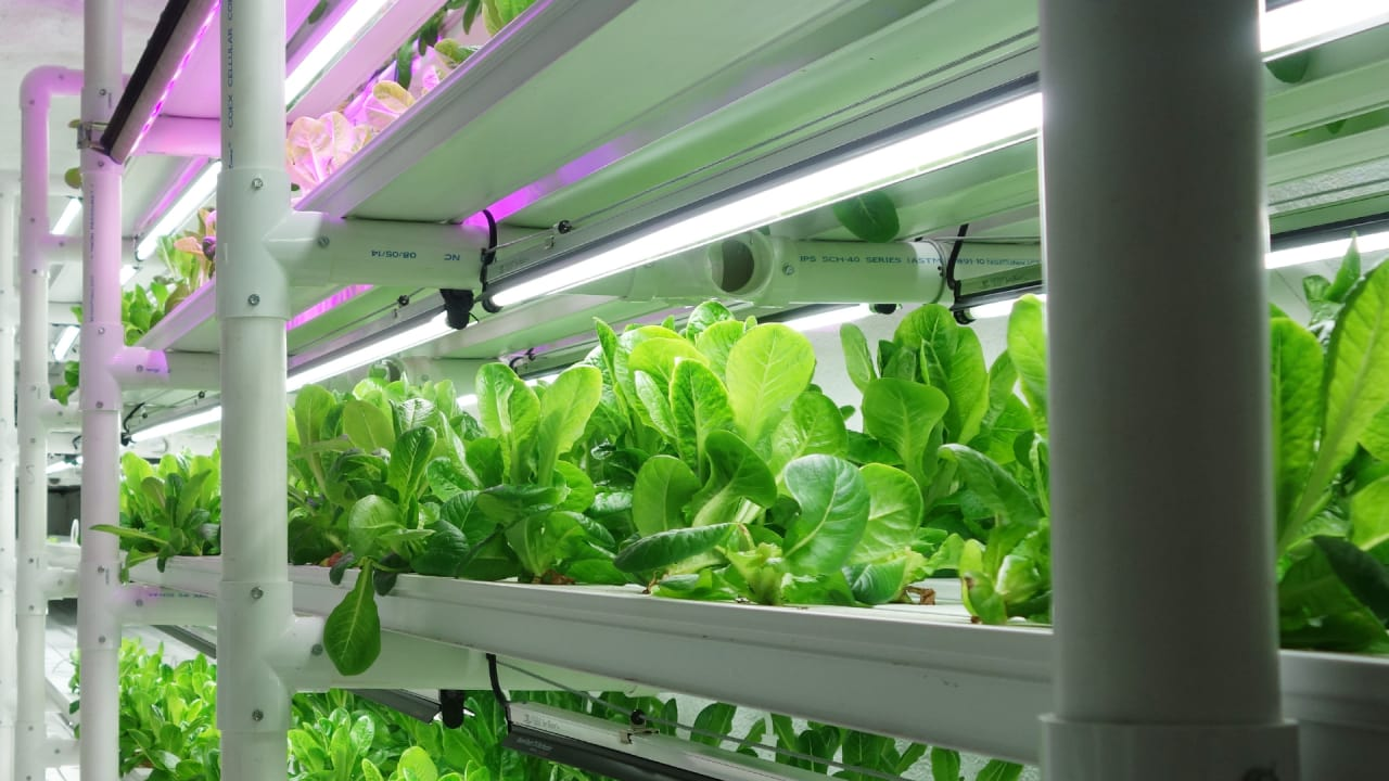 This Farm In A Box Can Grow As Much Lettuce As An Acre Of Land