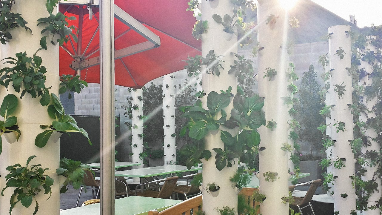 This Hollywood Restaurant Grows Your Food Next To Your Table