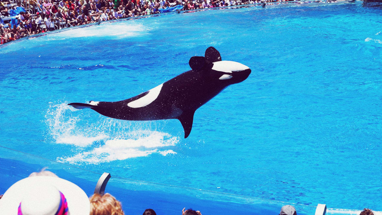 SeaWorld Is Spending $10 Million To Make You Forget About \u201cBlackfish\u201d