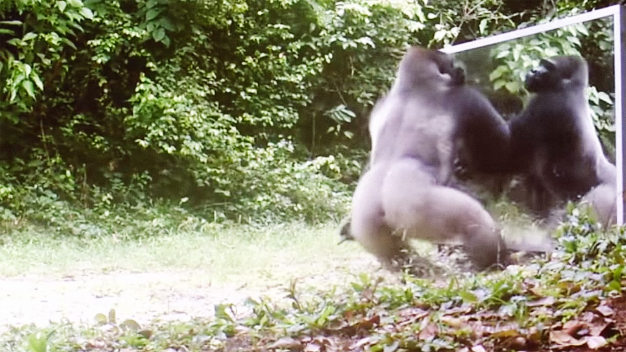 Watch The Wildly Different Reactions Of Wild Animals Seeing Themselves In A Mirror
