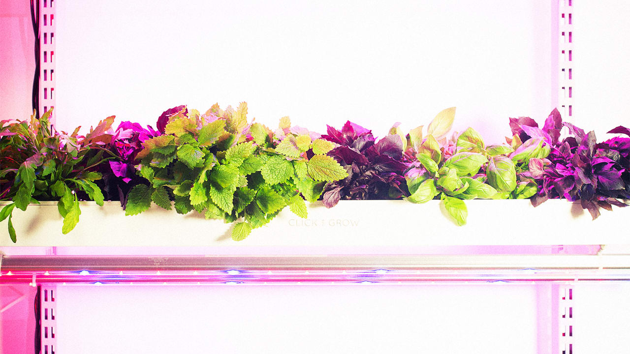 Grow A Full-Size Garden In Your Dark, Dingy Apartment With This Smart Farm