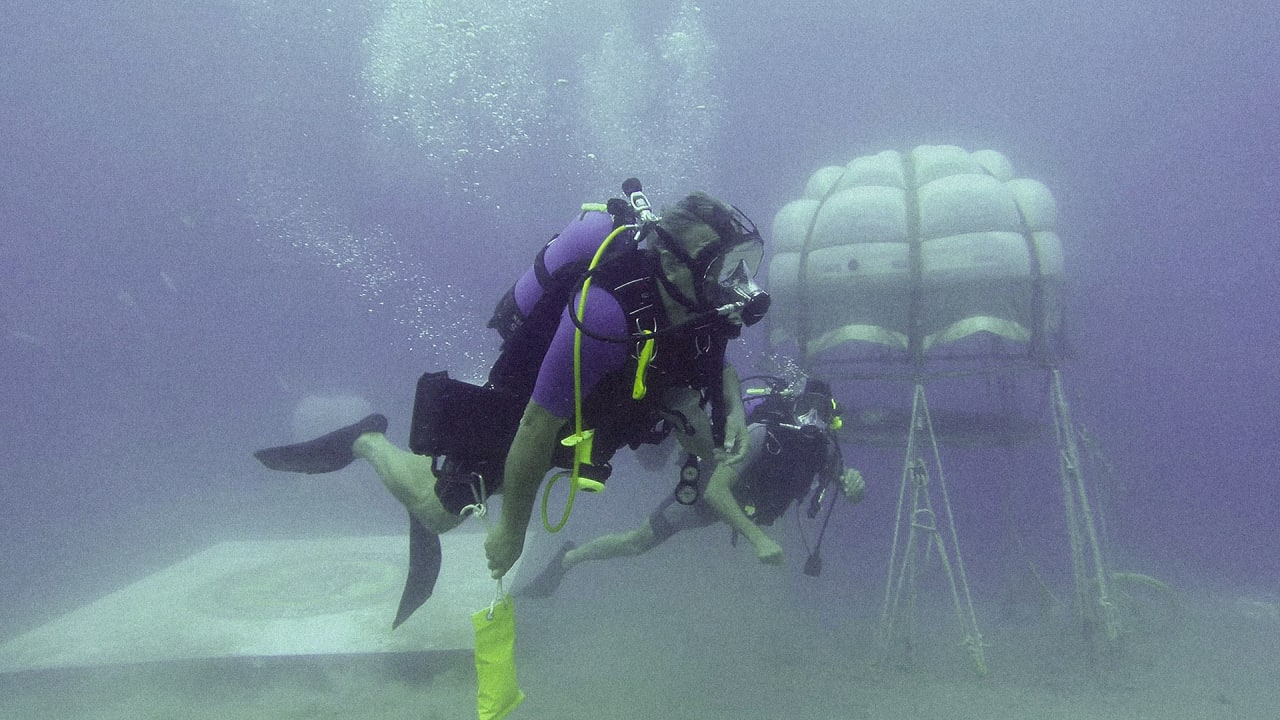 There Are Secret Underwater Gardens Off The Coast Of Italy Where Diver-Farmers Are Growing Vegetables