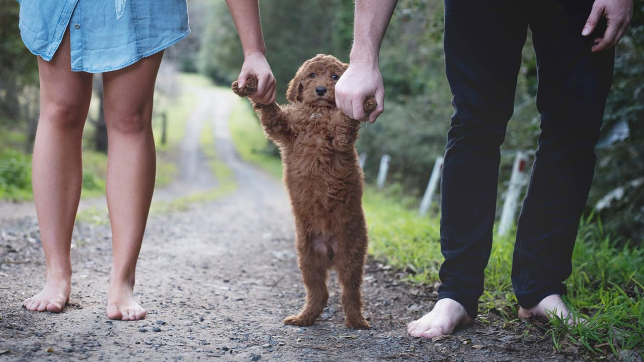 This Couple's Puppy Pictures Expertly Mock Every New Baby Photo In Your Facebook Feed
