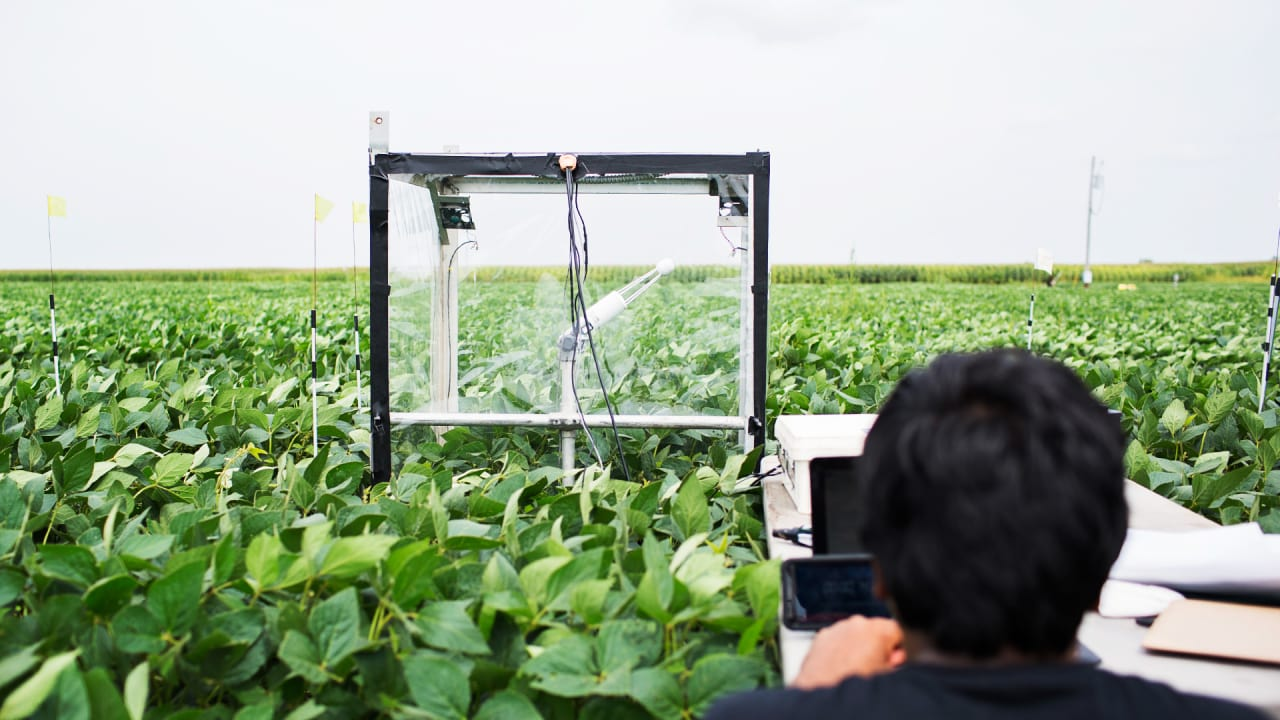 Improving Photosynthesis May Be Our Best Bet To Feed More People