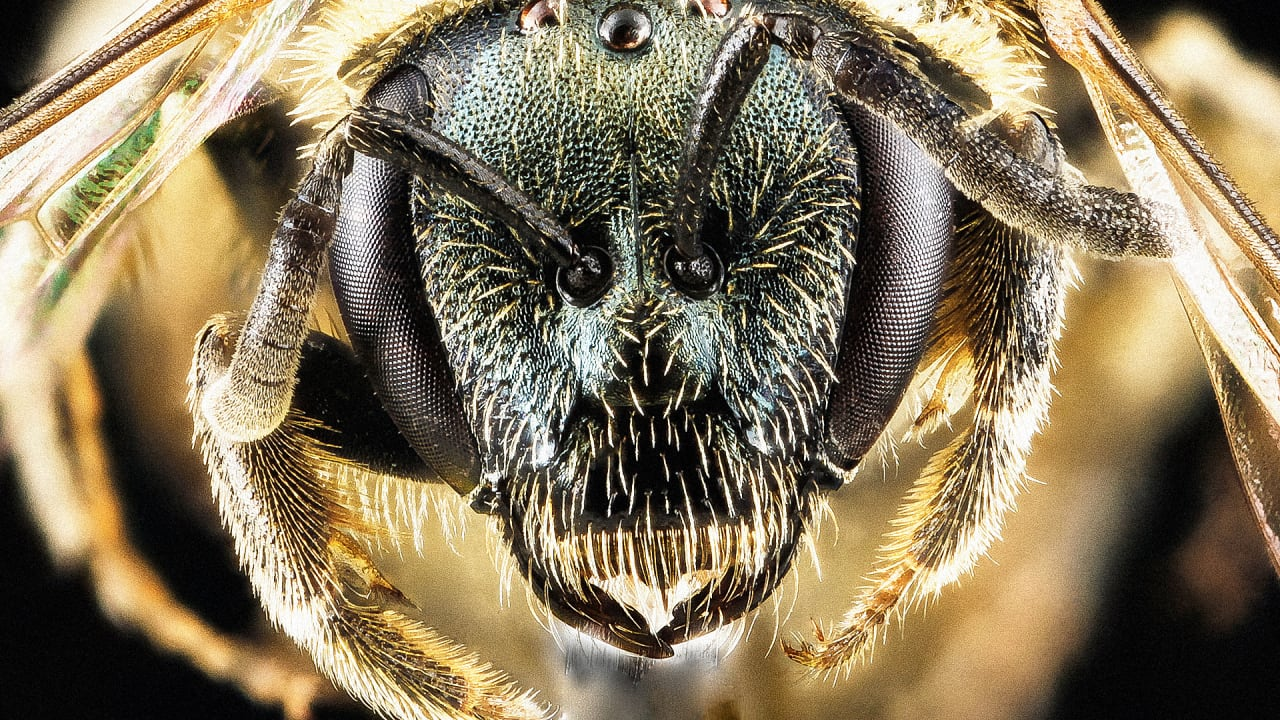 These Gorgeous Photos Get You Up And Close And Personal With Bees Before They're Gone