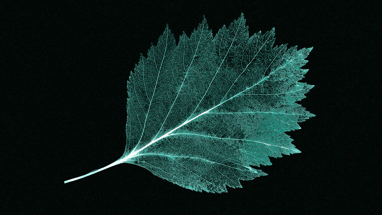 A Record-Breaking New Artificial Leaf Makes Power From Sun And Water