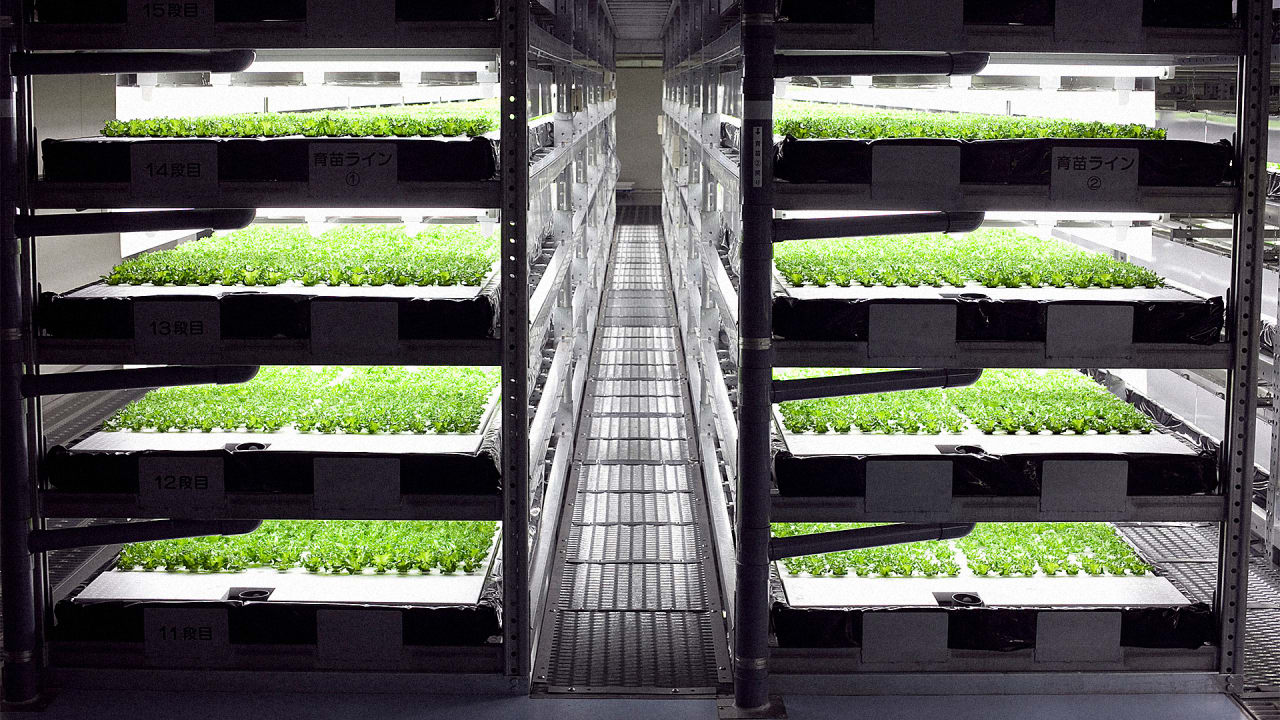 This Robot-Run Indoor Farm Can Grow 10 Million Heads Of Lettuce A Year