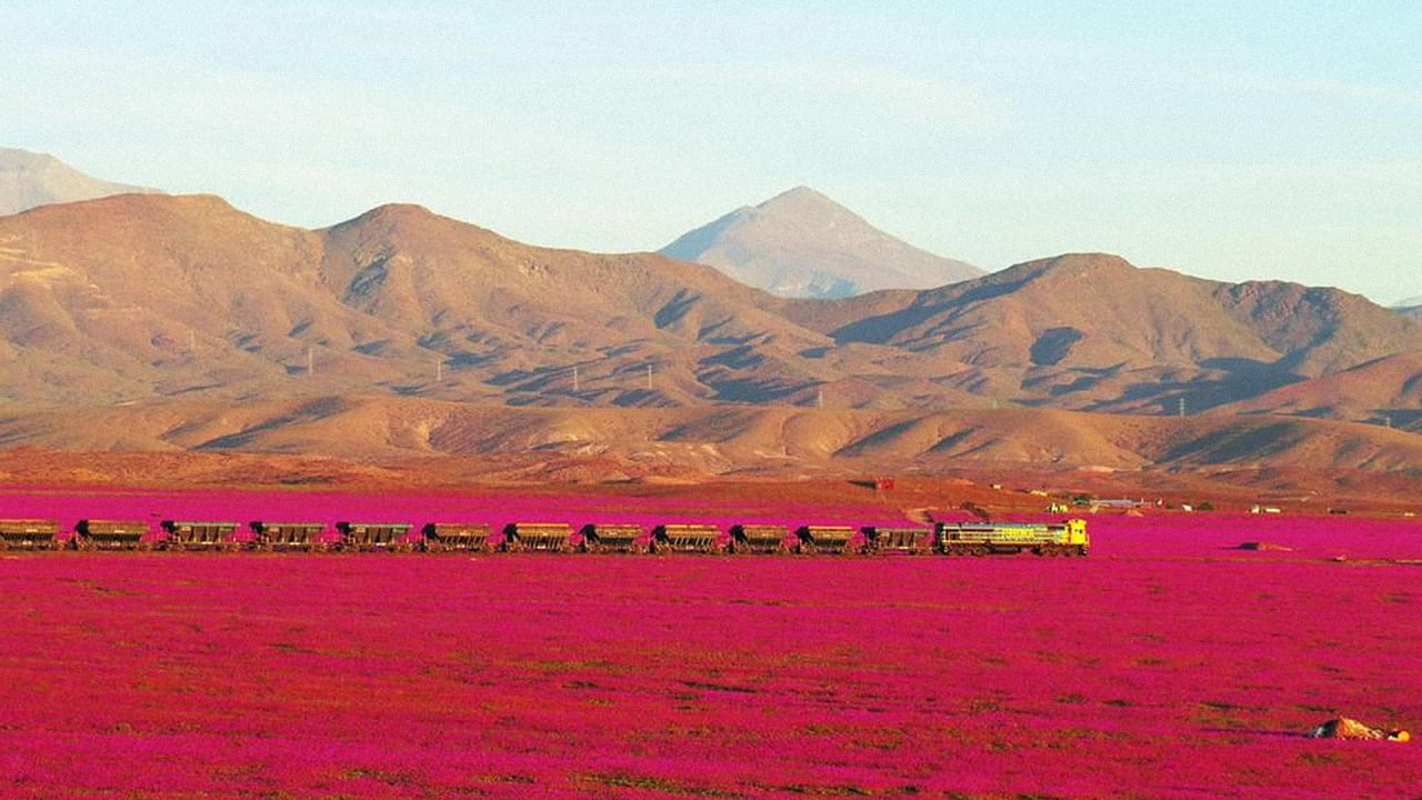 Look At The Beautiful Flowers That Suddenly Grew In One Of The Driest Places On Earth