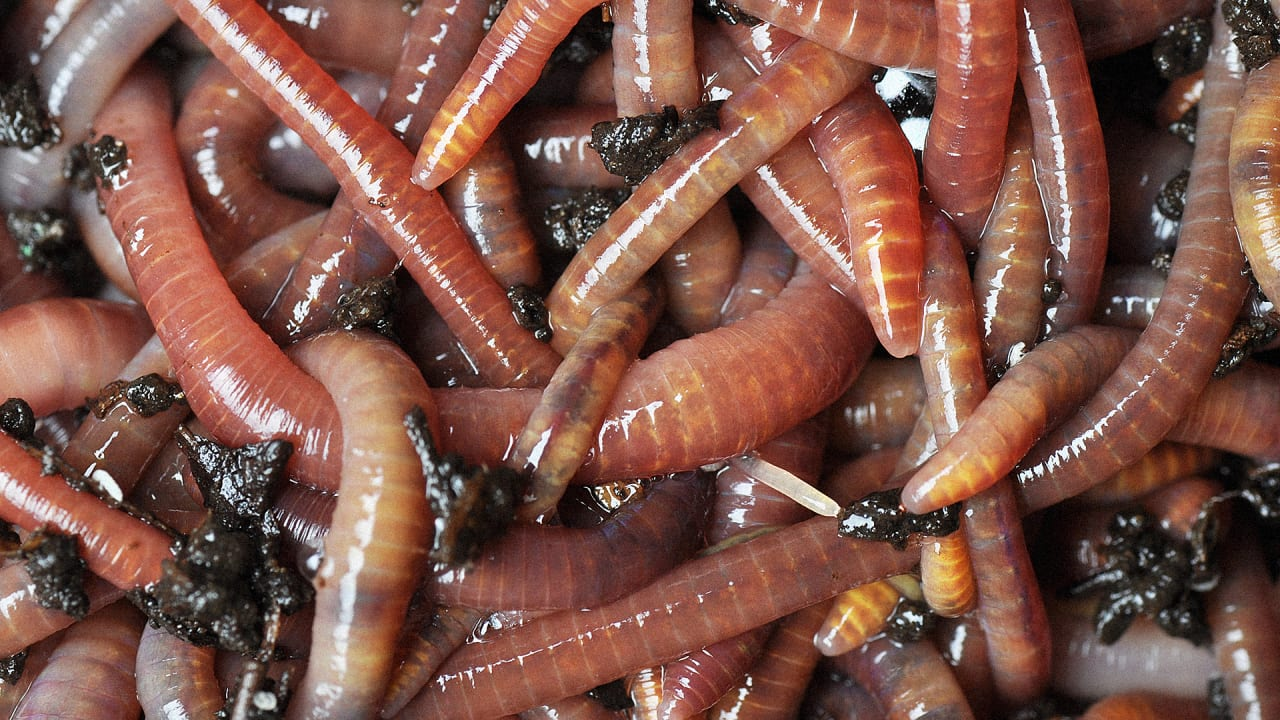 This Toilet Works By Using Poop-Eating Worms (Happy World